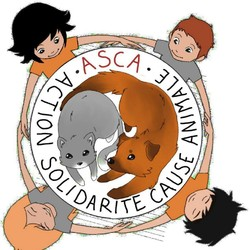 L'association ASCA, chats abandonnés