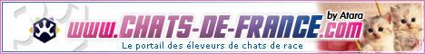 Chats de France, LesPtisKachotiers